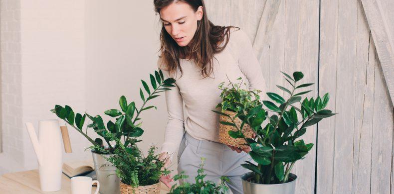 Cele mai rezistente plante de apartament: sfaturi de plantare și îngrijire