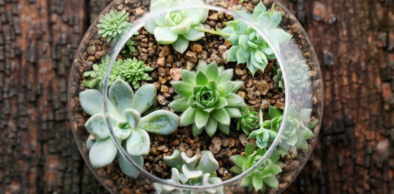Cum faci un terariu pentru plantele suculente – creează grădini în miniatură