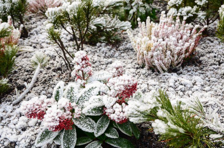 ingrijirea gradinii pe timp de iarna