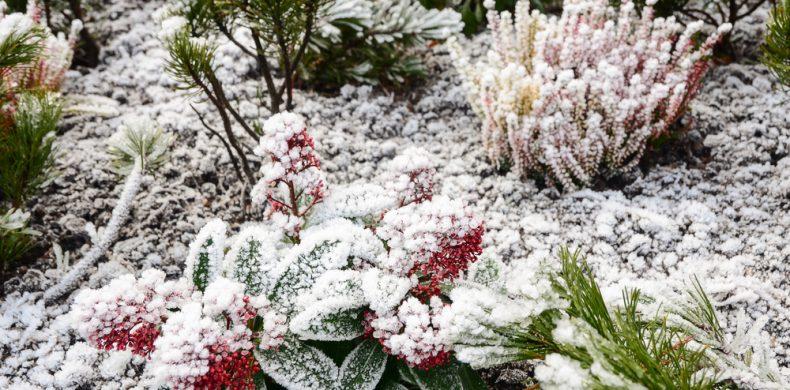 Îngrijirea grădinii pe timp de iarnă – cum să ai plante sănătoase și o curte veselă