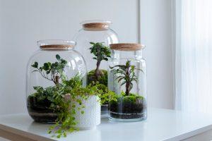 terrarium din sticle vechi