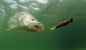 nada pentru pescuit