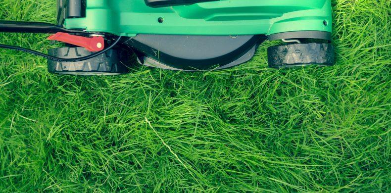 Ghid de plantare și întreținere a gazonului